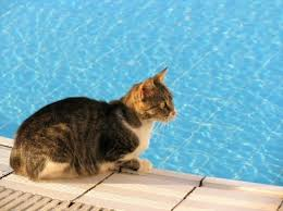 Image result for summer cats