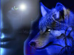 blue wolf background. Exellent Wolf Blue Wolf For Background M