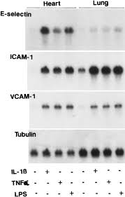 We Move Lightly Dustin O Halloran Sheet Music Interleukin 1 Induces Tissue And Cell Type Specific