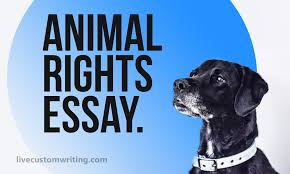 animal rights essay do animals have rights