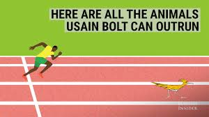 Animal Speed Chart Here Are All The Animals Usain Bolt Can Outrun