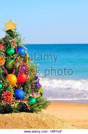 Hawaii Oahu Downtown Honolulu Christmas Tree Illuminated At Dusk Christmas Tree Hawaii