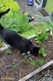 keep cats out of your yard naturally