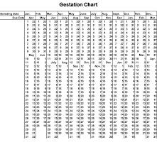 Gestation Chart Mutation Chinchilla Breeders Association