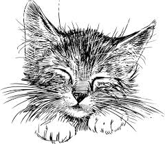 Image result for drawings of kittens