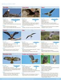 Raptors A Guide To Minnesotas Birds Of Prey Wild Bird Store