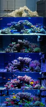 progression of a reef tank