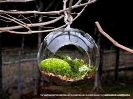 hanging glass globe diy moss terrarium kit live assorted moss lichens glass ball included