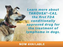 6 Dog Lymphoma Care Tips Canine Lymphoma Treatment