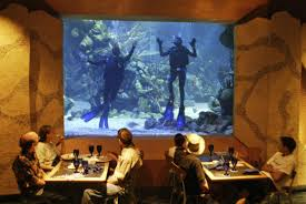 underwater restaurant disney world. In The Restaurant Ambiance. Scuba Divers Are From Epcot DiveQuest Tour Https://disneyworld.disney .go.com/events-tours/epcot/epcot-divequest/ Underwater Disney World