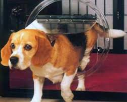 pet doors adelaide flaps for dogs and