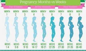 26 Weeks Is How Many Months Chart Get Free Printable Pregnancy Week By Week Chart Pictures