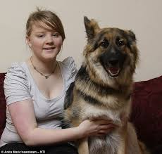 german shepherd attack victims. Perfect Attack Today Iona Manson Has Made A Full Recovery And Is Still Close To Fiddenu0027s  Brother And German Shepherd Attack Victims