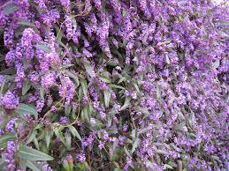 Best Climbing Plants  Burkeu0027s BackyardClimbing Plants That Like Shade
