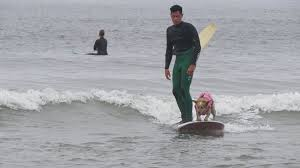 Image result for Pacifica dog surfing pictures