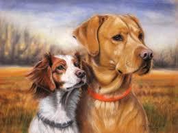 labrador retriever and brittany spaniel dog portrait