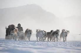 Resultado de imagen de reunión de perros en la nieve