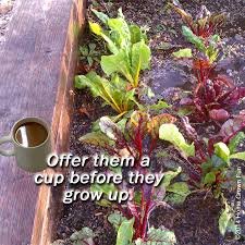 coffee ground for vegetables