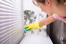how to get rid of mold on walls