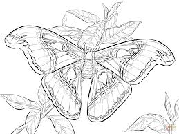 Small Picture Good Realistic Coloring Pages 49 For Your Coloring Site with