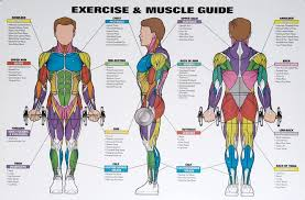 Nice Chart To Choose Which Muscle Group To Work Workout