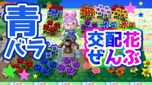 とび森実況お花の交配講座2青バラ含め全交配花紹介します Youtube