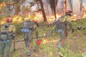 Spotlight How One Woman Rose To The Top Of Wildland Firefighting