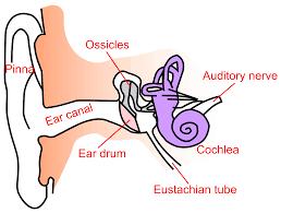 Hearing Impairment Conductive Hearing Loss Wikipedia