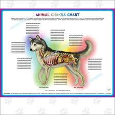 Animal Chakra Chart Animal Chakra Pendulum Charts Dog Cat Or Horse