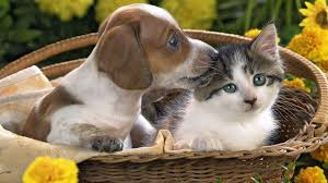 cute kittens and puppies wallpaper. Perfect Kittens Cute Puppy And Kitten Wallpaper Images U0026 Pictures  Becuo Inside Kittens Puppies E