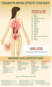 infographic showing how smoking affects the body for a text  want to know how smoking affect your health check out this infographic on the health effects of smoking at betobacco