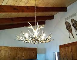 authentic antler chandelier or mule deer antler chandelier real antler mule deer chandelier 2 mule deer