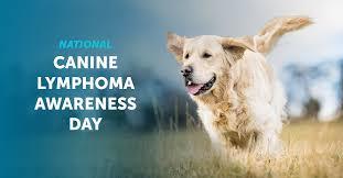 Canine Lymphoma Symptoms National Canine Lymphoma Awareness Day Vetdc