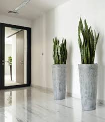 office indoor plants. Indoor Plants For Office