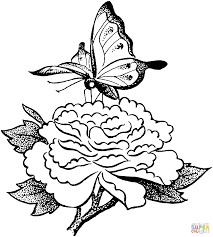 Small Picture Butterfly On A Flower coloring page Free Printable Coloring Pages
