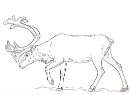 Small Picture Swedish Reindeer coloring page Free Printable Coloring Pages