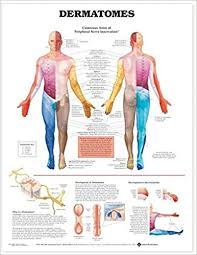 Buy Dermatomes Anatomical Chart Book Online At Low Prices In