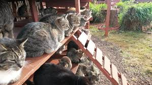 hundreds of cats.  Cats Cat With Hundreds Of Cats I