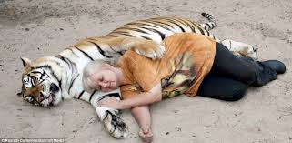 Image result for pet tiger