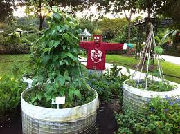 build a raised garden bed for the tropics