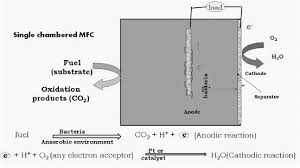 Role Of Microalgae In Microbial Fuel Cell Springerlink