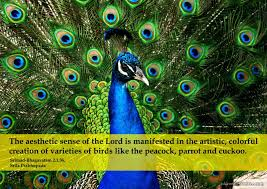 Peacock Beauty Quotes Best of Aesthetic Sense Of The Lord Spiritual Quotes By ISKCON Desire Tree