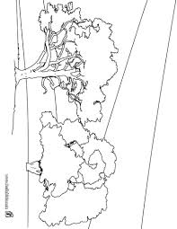 Small Picture Pine tree coloring pages Hellokidscom