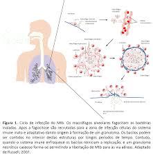 Ciclo Mtb c legenda TuberculoseTuberculose