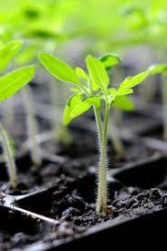growing your own plants from seed lets you try varieties of plants and vegetables you can t find in the big box s it is a great way to expand what you