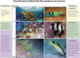 Coral Classification Chart Classification Of Reef Zones Off Curaçao Smithsonian Ocean