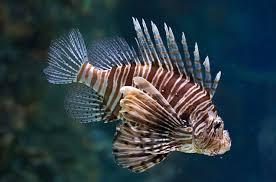types of aquarium fish. photo gallery types of aquarium fish