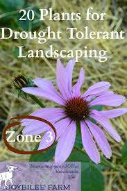 Small Picture 20 Drought Tolerant Plants for Your Zone 3 Garden Joybilee Farm