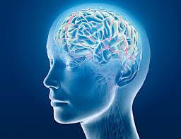 Beyin mi Aptal İnsan mı?