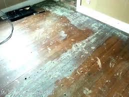 adhesive hardwood removing carpet floors vinyl tile carpetin how